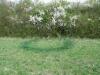 fairy-ring-03.jpg