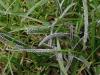 slime-mold-01.jpg