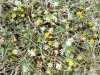 clover-yellow-01.jpg